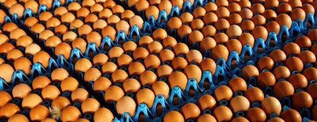 """Uova contaminate, Ue: anche l'Italia tra i Paesi coinvolti. Il ministero della Salute: """"Mai messe in commercio"""""""